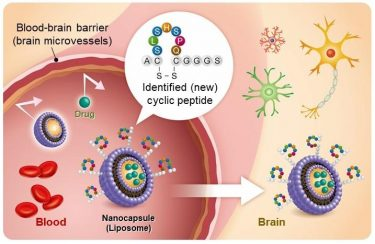 Liposome drug delivery