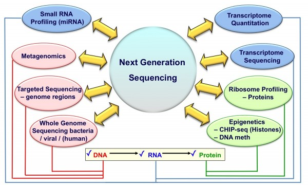 FIGURE 3 Applications of Next Generation Sequencing Technologies. Listed are some of the different applications possible on a single NGS sequencing machine which span across the central dogma of molecular biology ('DNA makes RNA makes protein')