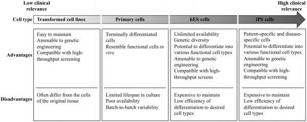 Drug screens on human stem cells: From understanding cell