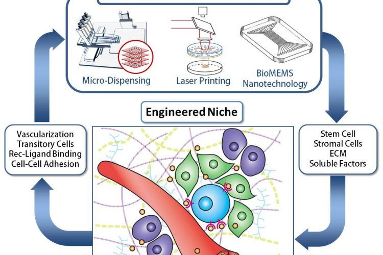 In Search Of The Holy Grail Engineering The Stem Cell Niche