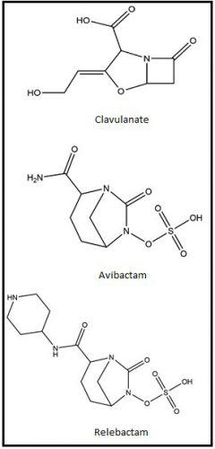 Clavulanate, avibactam and relebactam