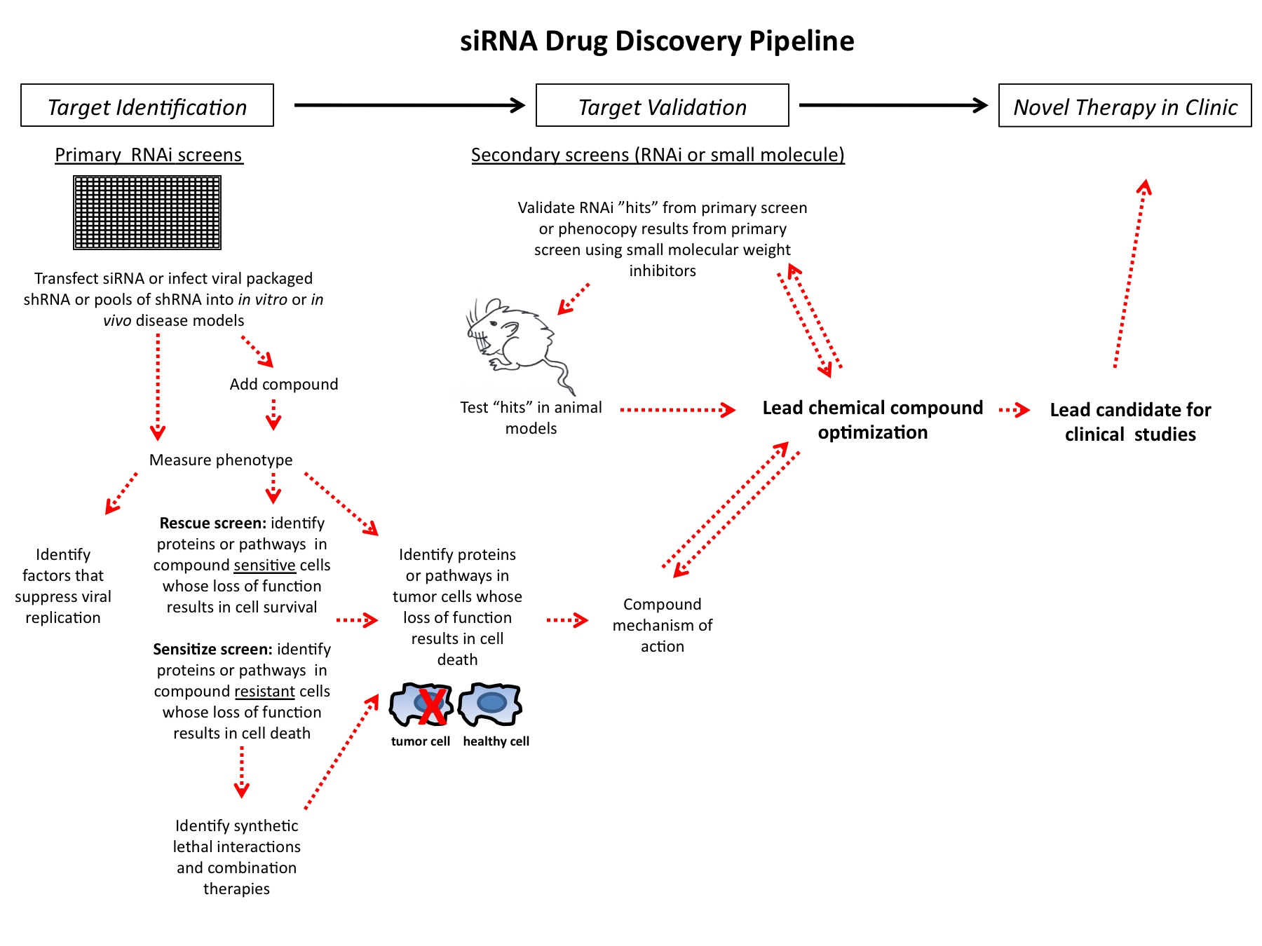 Figure 1 siRNA drug discovery pipeline
