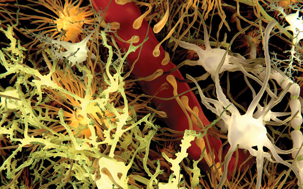 The role of drug transporters at the blood brain barrier