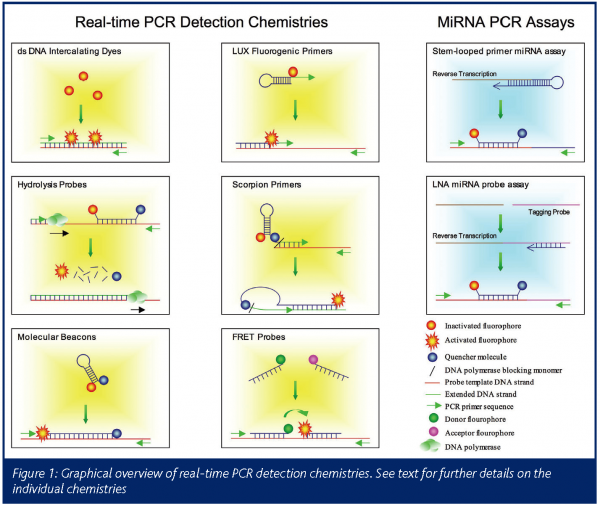 Options for quantitative analysis by real-time PCR