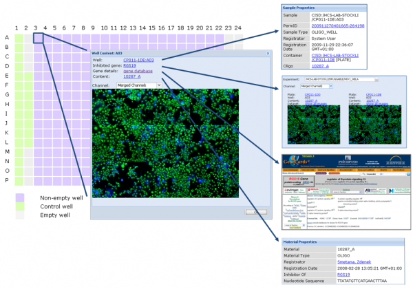 Figure 2 HCS metadata and data are linked which allows drill-in to detail information as needed. In this example, the user starts with a plate layout, from there looks at the images for one well, learns about what gene the well is connected to, gets more information about this gene from GeneCards and asks for an overview of other images measured where the same gene is suppressed