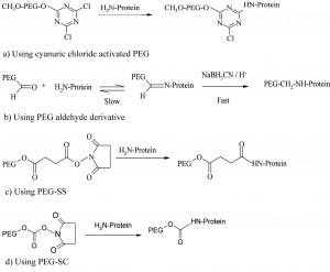Figure 1 PEGylation process using amine conjugation chemistries