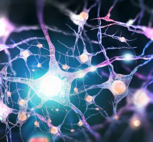 Neurons affected by Parkinson's disease