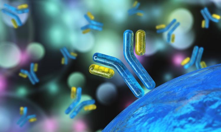 Antibody near cells