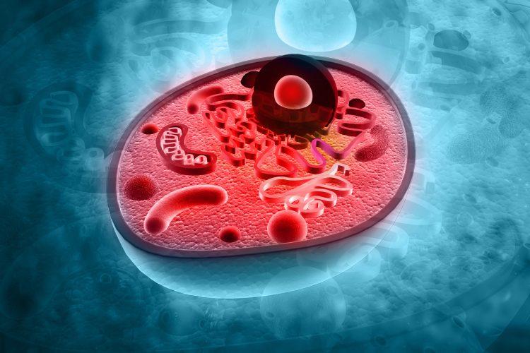capsosomes