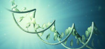 Plant DNA concept