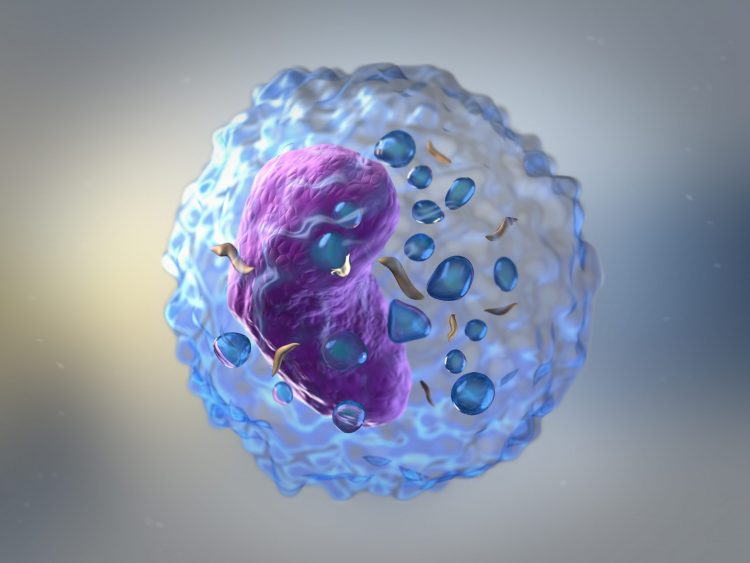 artist rendering of a T cell